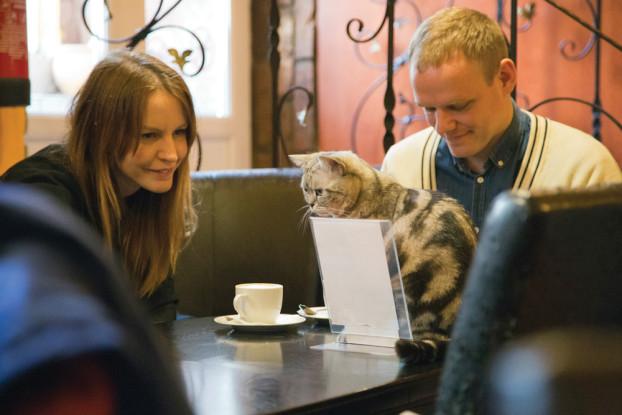 Im CatCafé trinkt man seinen Kaffee nie ohne nette Gesellschaft.